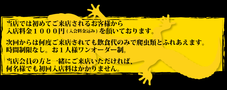 爬虫類カフェの新スタッフメンフクロウ